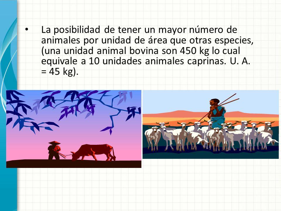La posibilidad de tener un mayor número de animales por unidad de área que otras especies, (una unidad animal bovina son 450 kg lo cual equivale a 10 unidades animales caprinas.