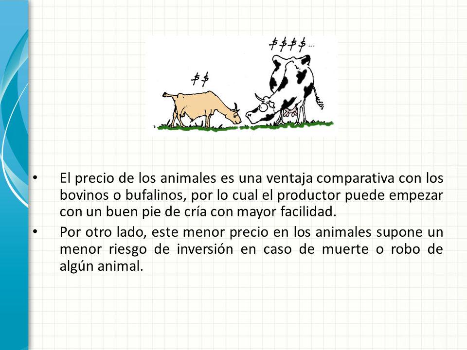 El precio de los animales es una ventaja comparativa con los bovinos o bufalinos, por lo cual el productor puede empezar con un buen pie de cría con mayor facilidad.