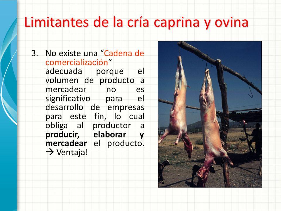 Limitantes de la cría caprina y ovina