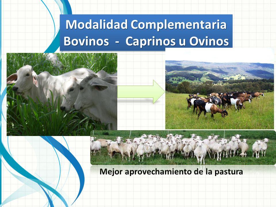 Modalidad Complementaria Bovinos - Caprinos u Ovinos