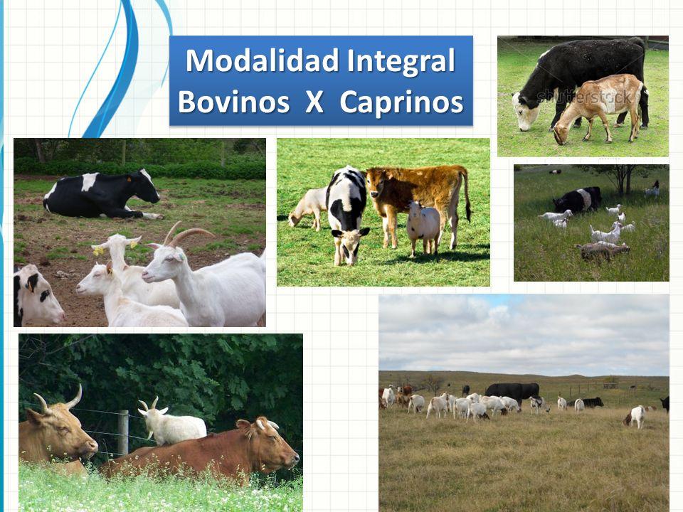 Modalidad Integral Bovinos X Caprinos