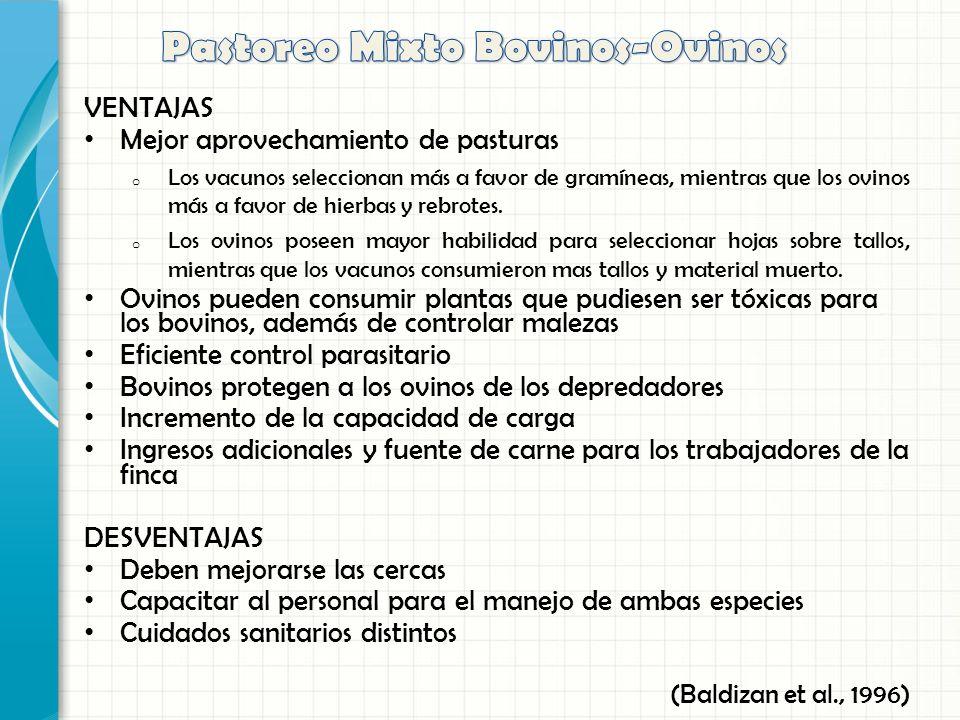 Pastoreo Mixto Bovinos-Ovinos