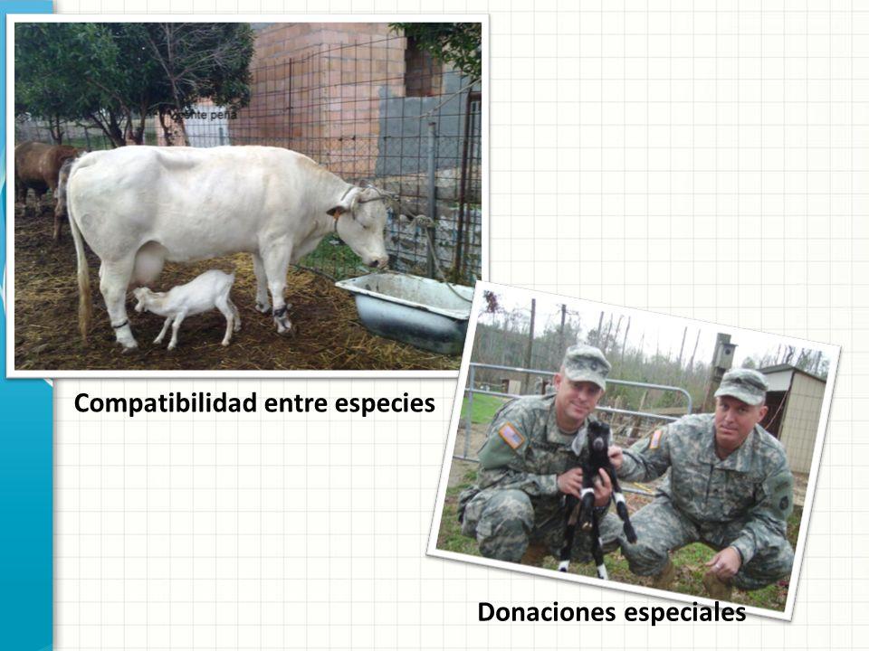 Compatibilidad entre especies