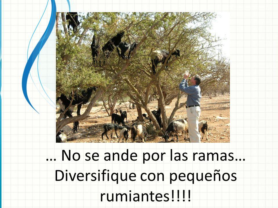 … No se ande por las ramas… Diversifique con pequeños rumiantes!!!!