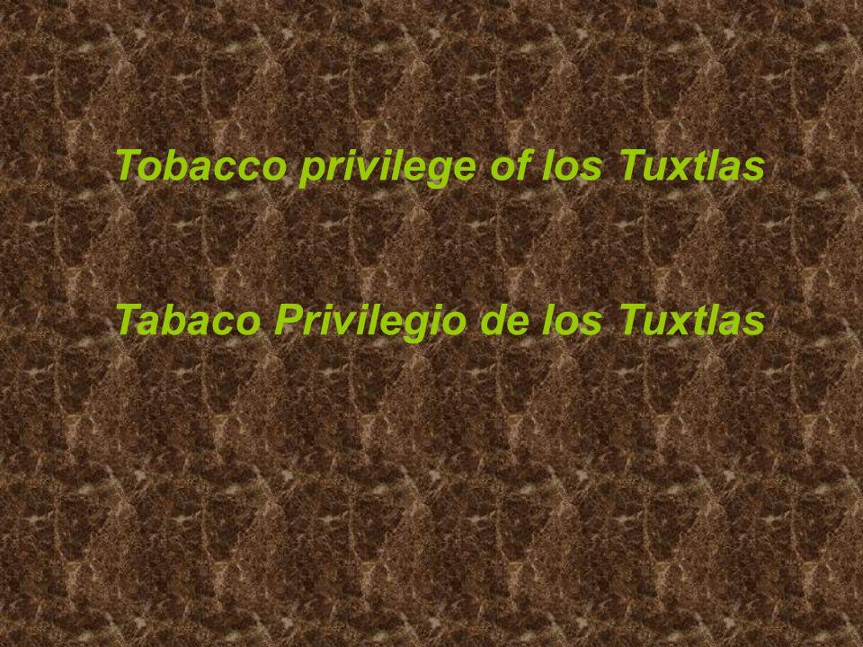 Tobacco privilege of los Tuxtlas Tabaco Privilegio de los Tuxtlas