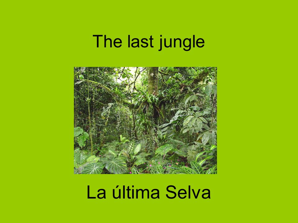The last jungle La última Selva