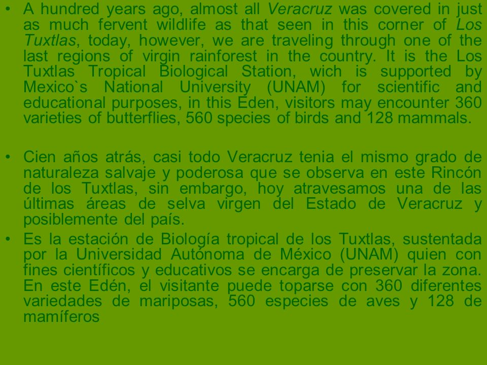 A hundred years ago, almost all Veracruz was covered in just as much fervent wildlife as that seen in this corner of Los Tuxtlas, today, however, we are traveling through one of the last regions of virgin rainforest in the country. It is the Los Tuxtlas Tropical Biological Station, wich is supported by Mexico`s National University (UNAM) for scientific and educational purposes, in this Eden, visitors may encounter 360 varieties of butterflies, 560 species of birds and 128 mammals.