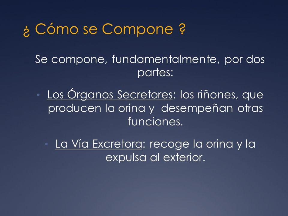 ¿ Cómo se Compone Se compone, fundamentalmente, por dos partes: