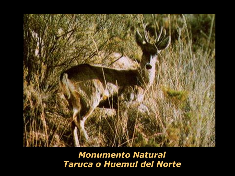 Monumento Natural Taruca o Huemul del Norte
