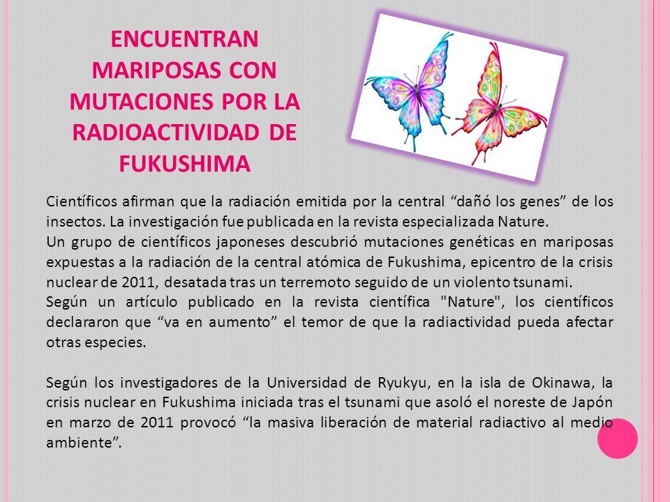 ENCUENTRAN MARIPOSAS CON MUTACIONES POR LA RADIOACTIVIDAD DE FUKUSHIMA