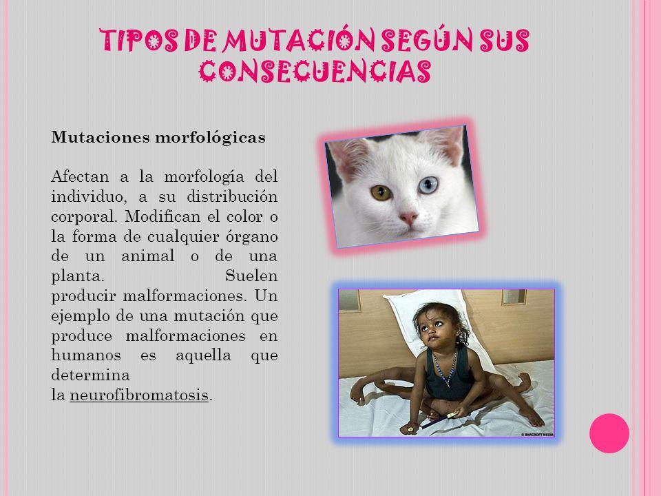 TIPOS DE MUTACIÓN SEGÚN SUS CONSECUENCIAS