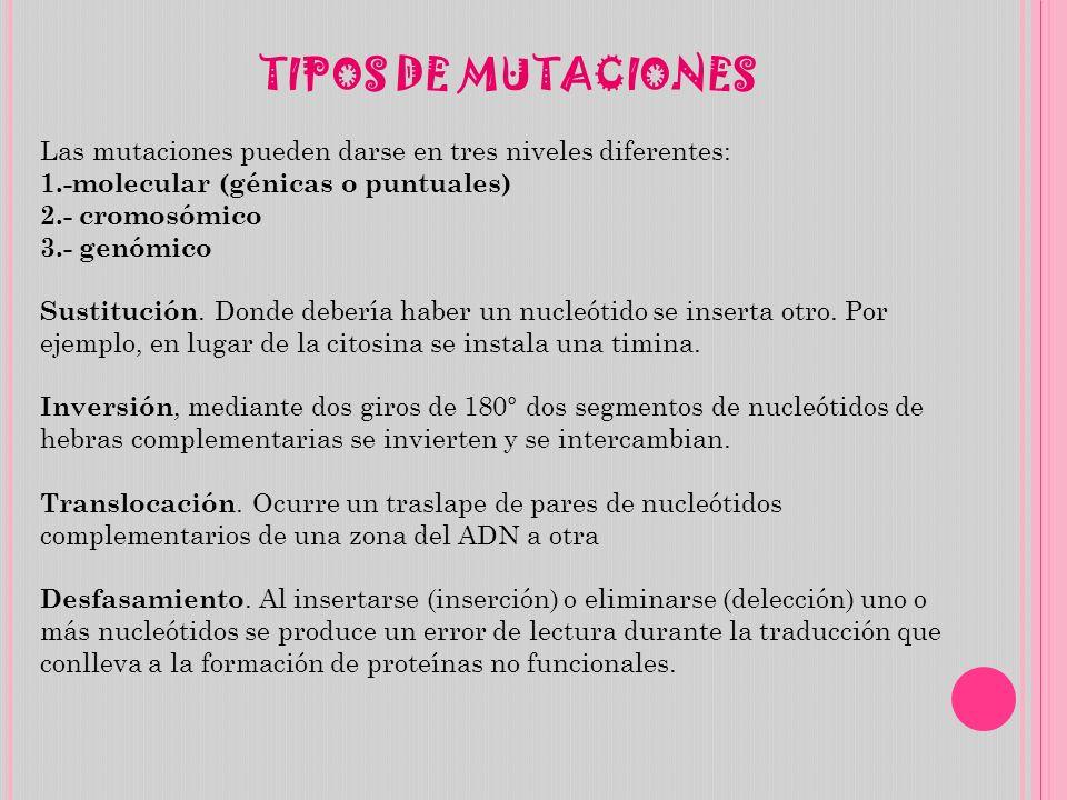 TIPOS DE MUTACIONES Las mutaciones pueden darse en tres niveles diferentes: 1.-molecular (génicas o puntuales)