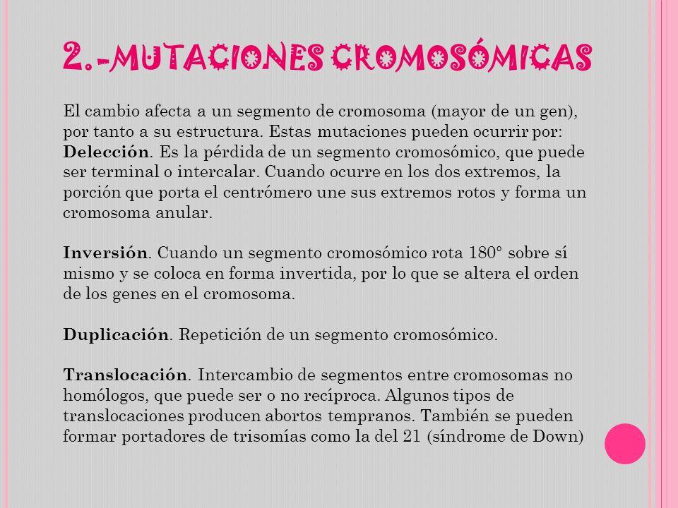 2.-MUTACIONES CROMOSÓMICAS