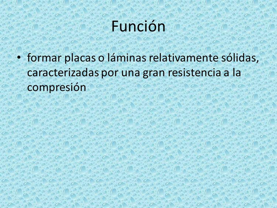 Función formar placas o láminas relativamente sólidas, caracterizadas por una gran resistencia a la compresión.