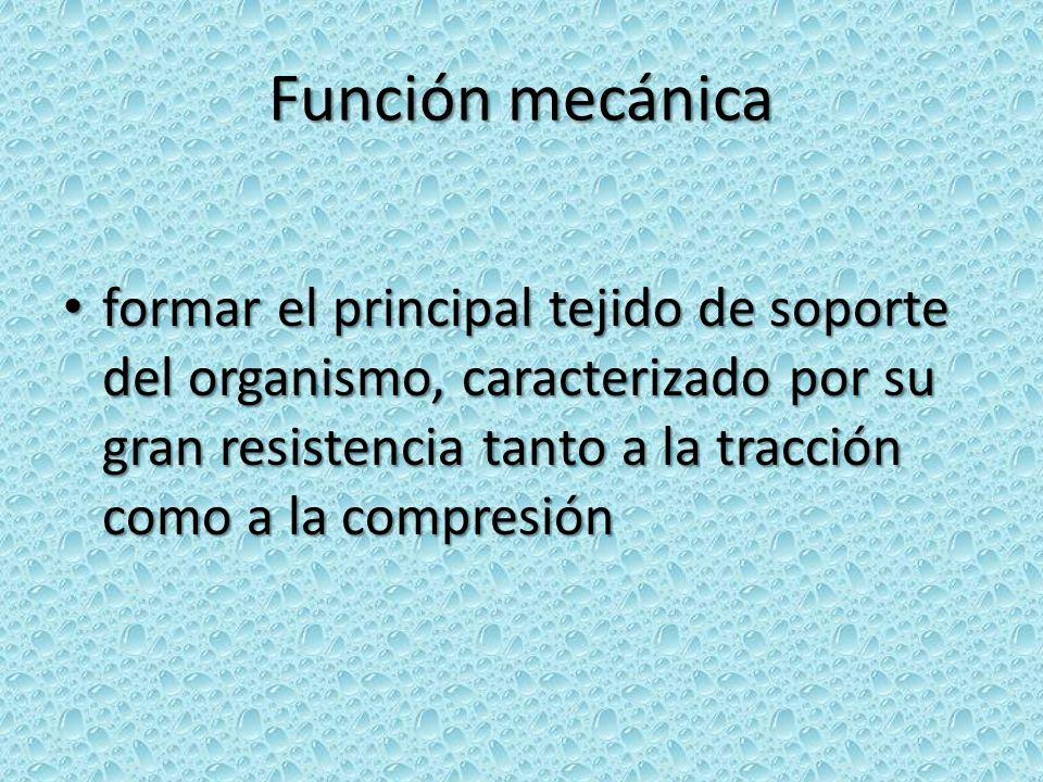 Función mecánica formar el principal tejido de soporte del organismo, caracterizado por su gran resistencia tanto a la tracción como a la compresión.
