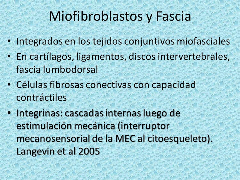 Miofibroblastos y Fascia