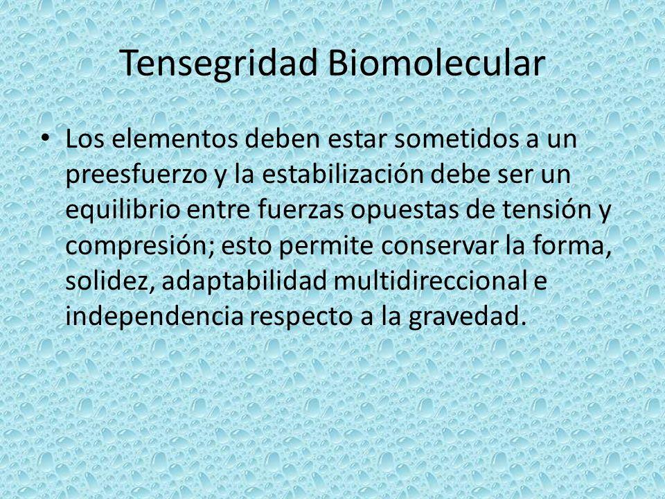 Tensegridad Biomolecular