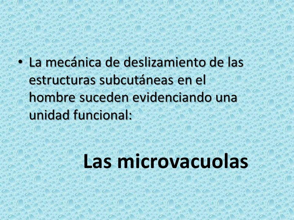 La mecánica de deslizamiento de las estructuras subcutáneas en el hombre suceden evidenciando una unidad funcional: