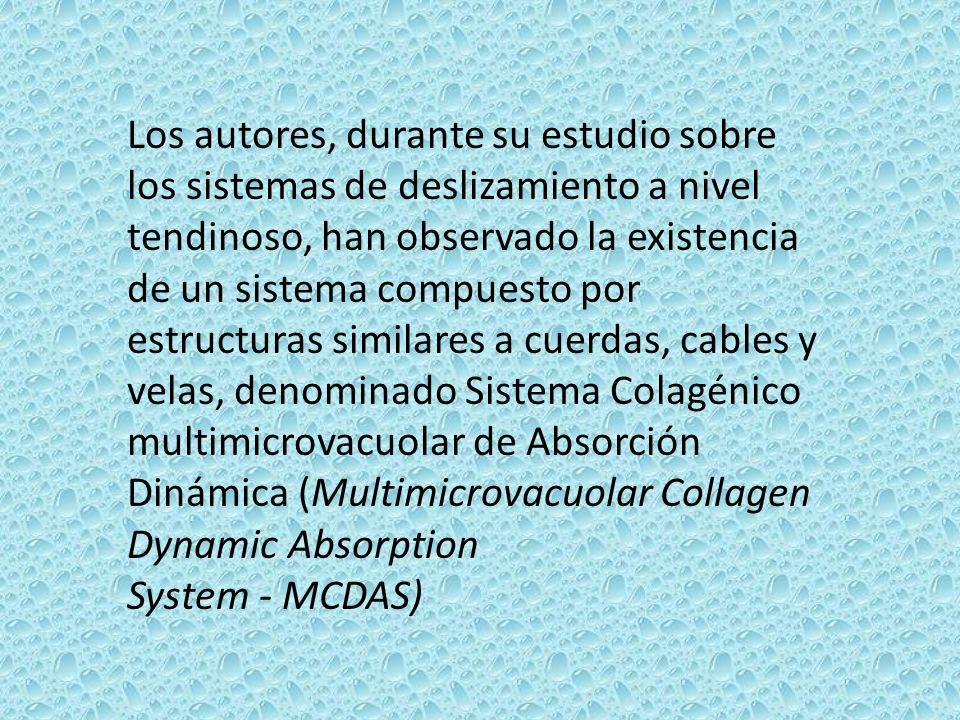 Los autores, durante su estudio sobre los sistemas de deslizamiento a nivel tendinoso, han observado la existencia de un sistema compuesto por