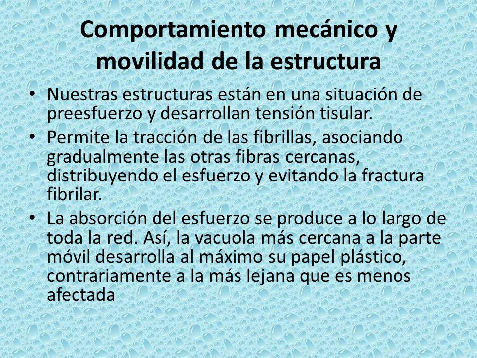 Comportamiento mecánico y movilidad de la estructura