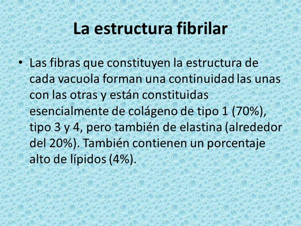 La estructura fibrilar