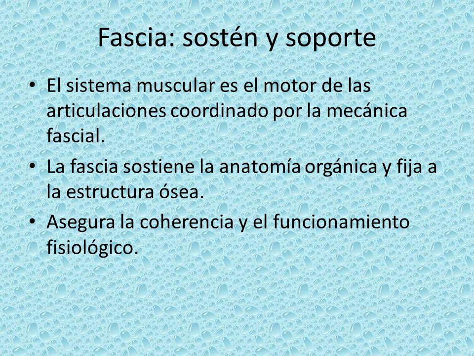Fascia: sostén y soporte