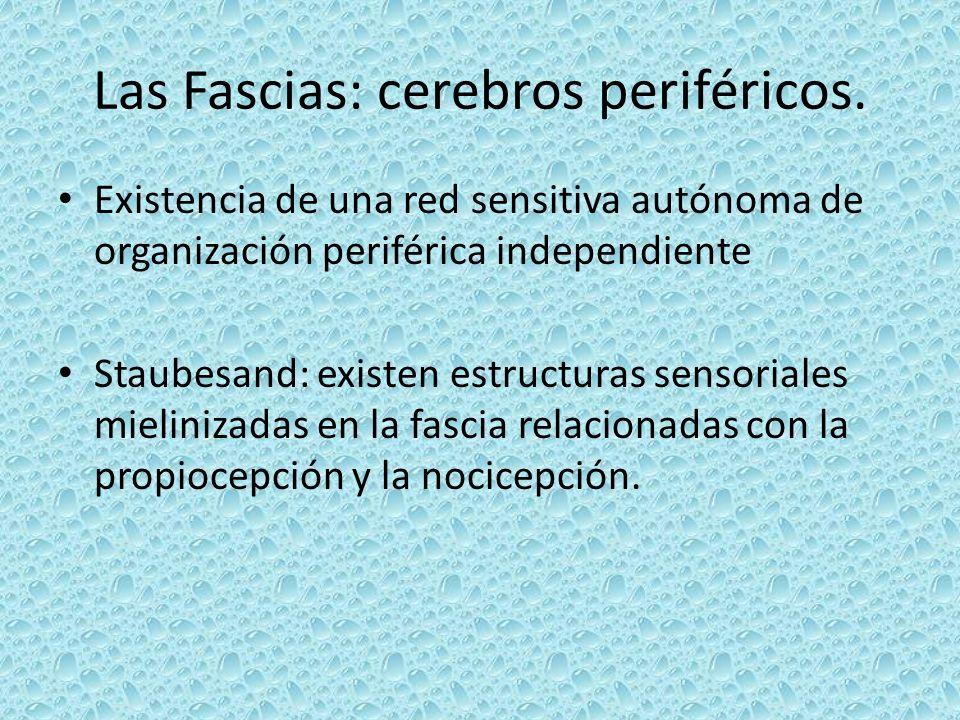 Las Fascias: cerebros periféricos.