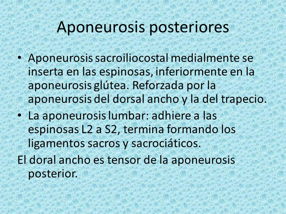 Aponeurosis posteriores