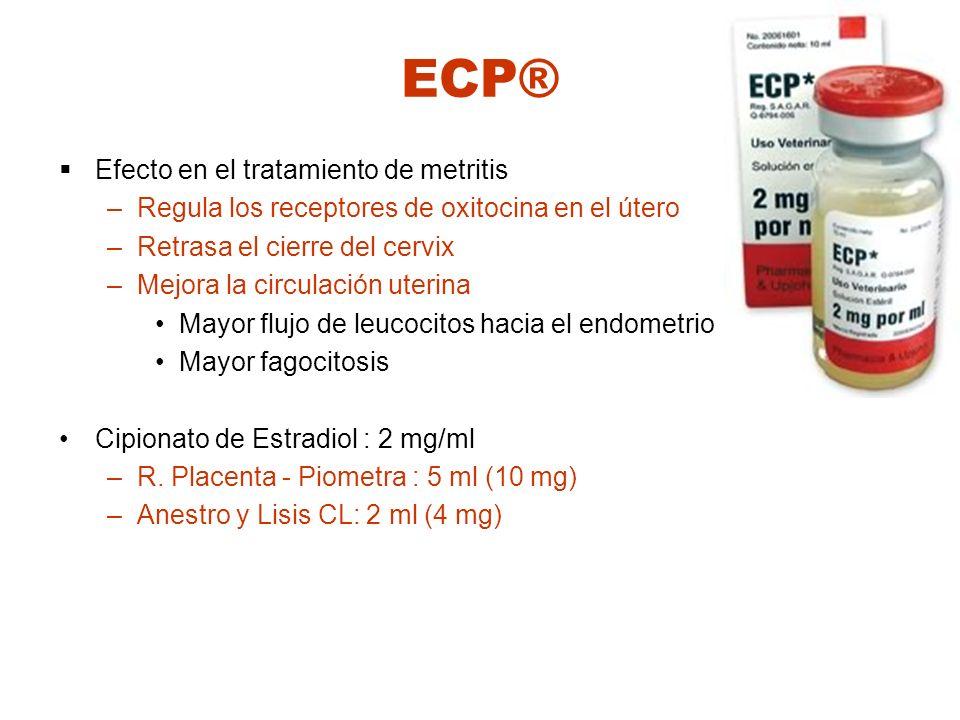 ECP® Efecto en el tratamiento de metritis