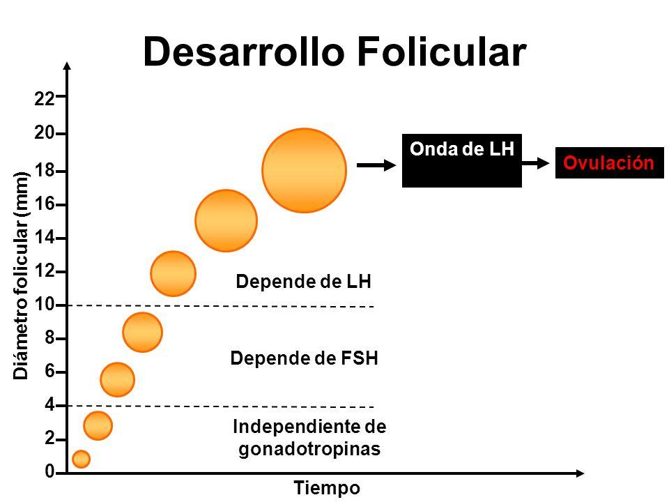 Diámetro folicular (mm)