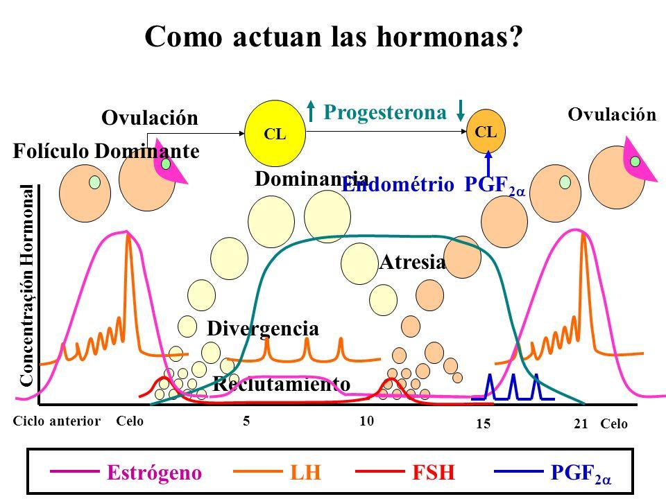 Como actuan las hormonas