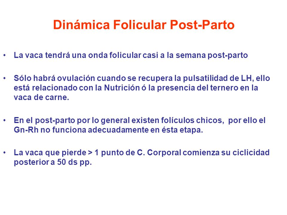 Dinámica Folicular Post-Parto