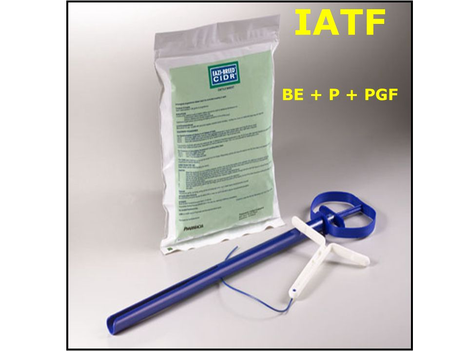 IATF BE + P + PGF