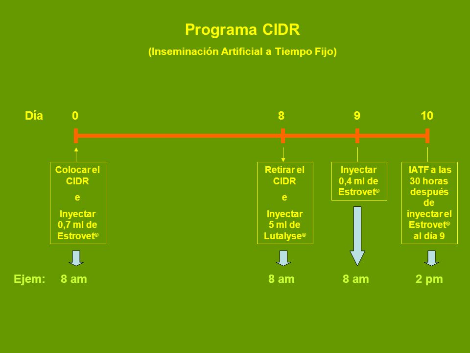 Programa CIDR Día 0 8 9 10 Ejem: 8 am 8 am 8 am 2 pm