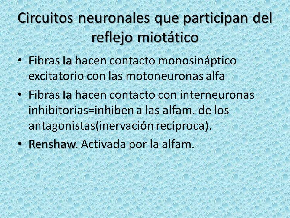 Circuitos neuronales que participan del reflejo miotático