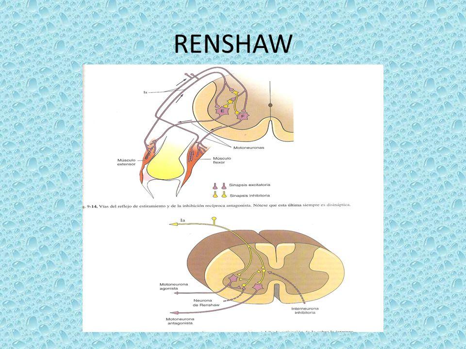 RENSHAW