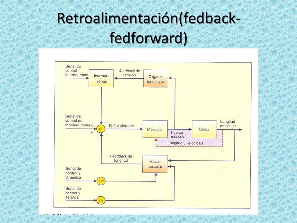 Retroalimentación(fedback-fedforward)