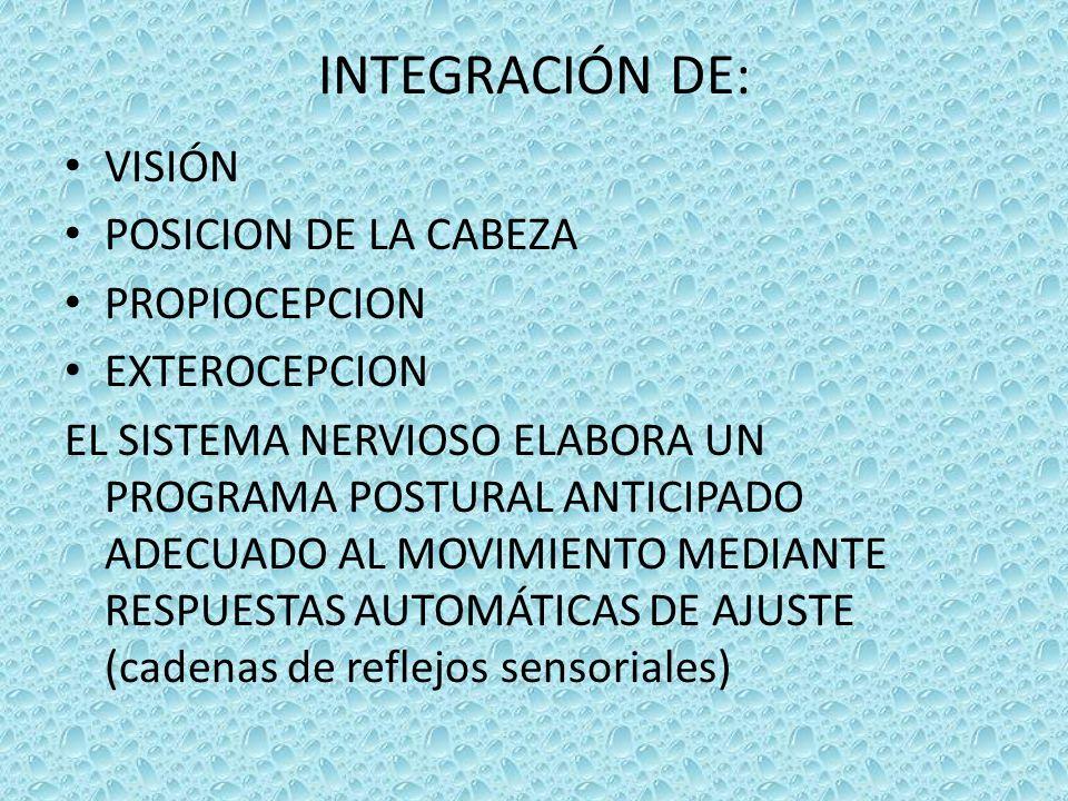 INTEGRACIÓN DE: VISIÓN POSICION DE LA CABEZA PROPIOCEPCION