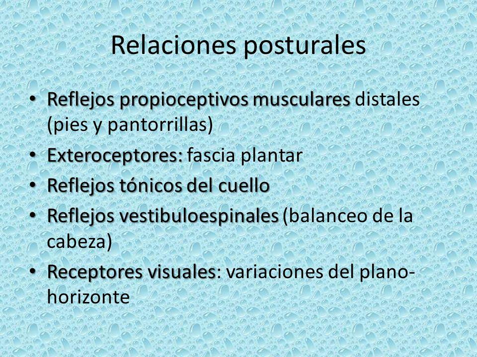 Relaciones posturales