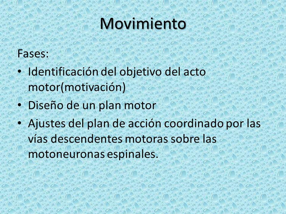Movimiento Fases: Identificación del objetivo del acto motor(motivación) Diseño de un plan motor.
