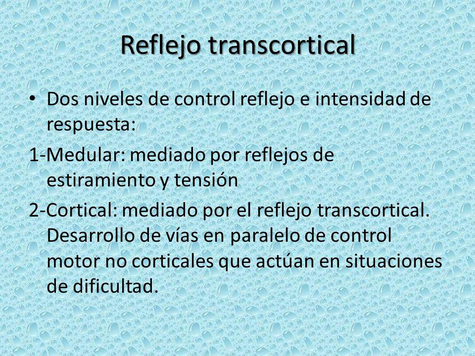 Reflejo transcortical