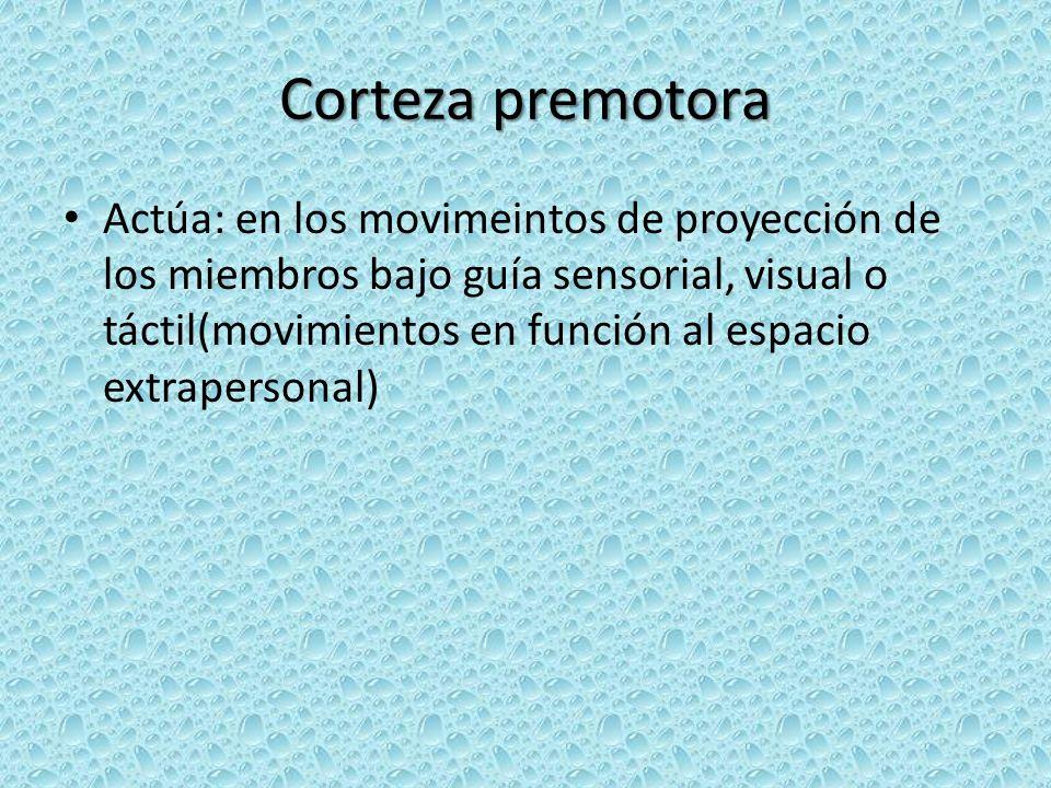 Corteza premotora