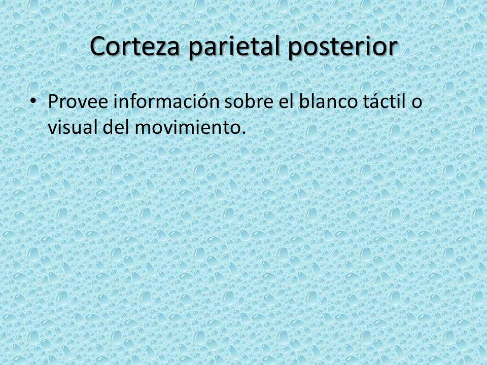 Corteza parietal posterior
