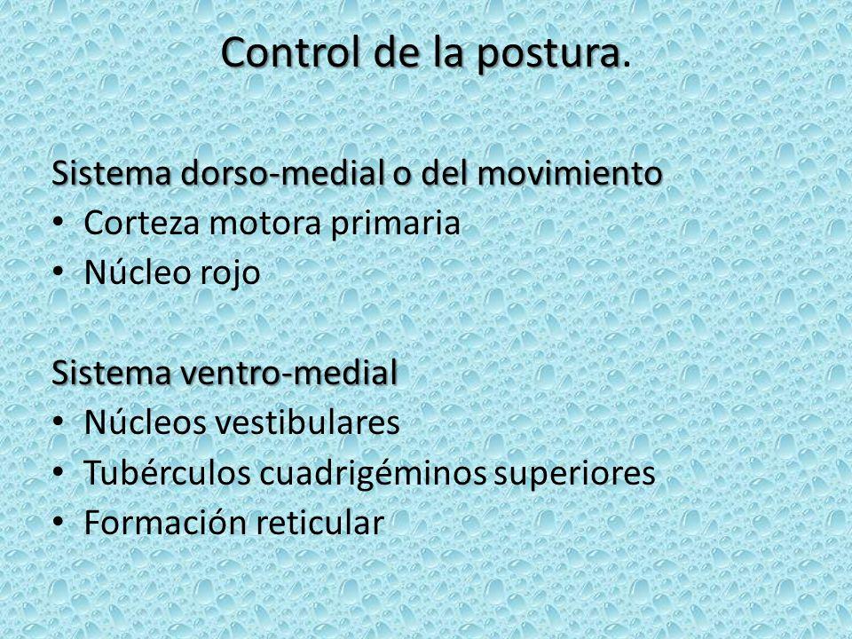 Control de la postura. Sistema dorso-medial o del movimiento