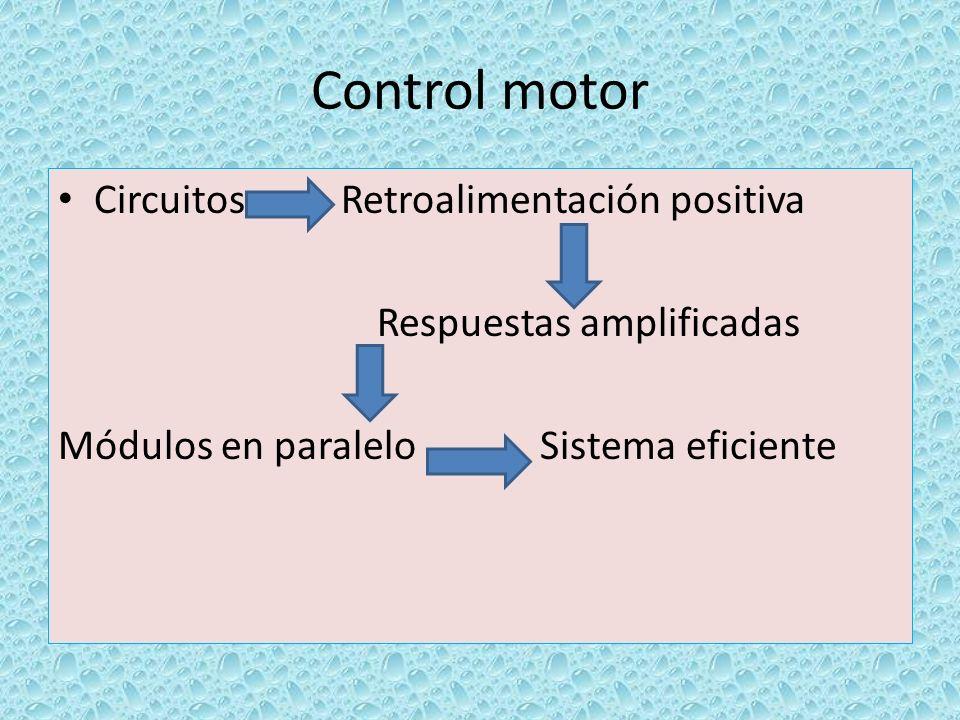 Control motor Circuitos Retroalimentación positiva