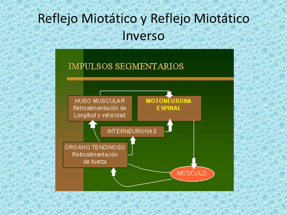Reflejo Miotático y Reflejo Miotático Inverso
