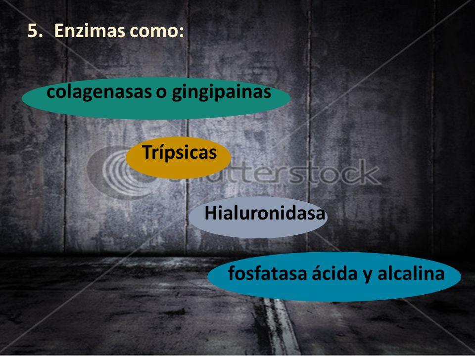 Enzimas como: colagenasas o gingipainas Trípsicas Hialuronidasa fosfatasa ácida y alcalina