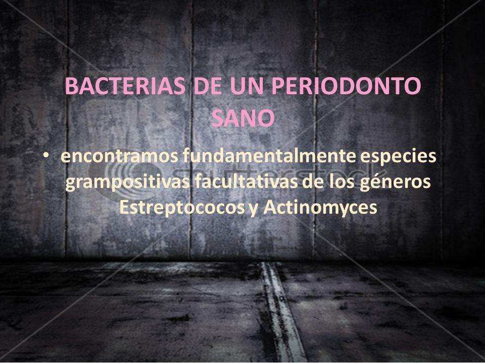 BACTERIAS DE UN PERIODONTO SANO