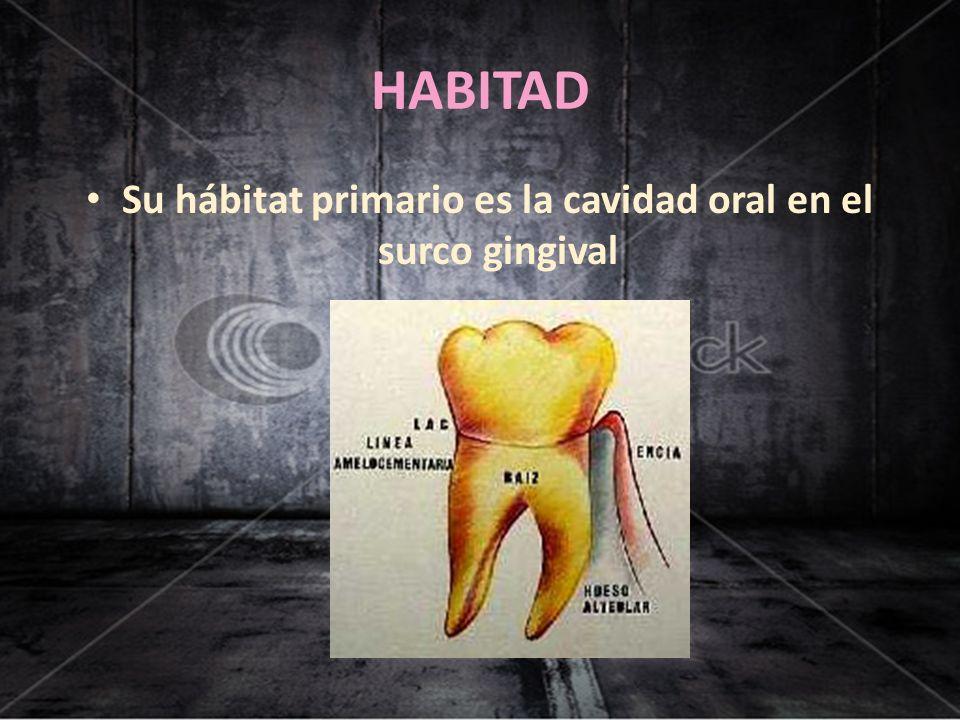 Su hábitat primario es la cavidad oral en el surco gingival