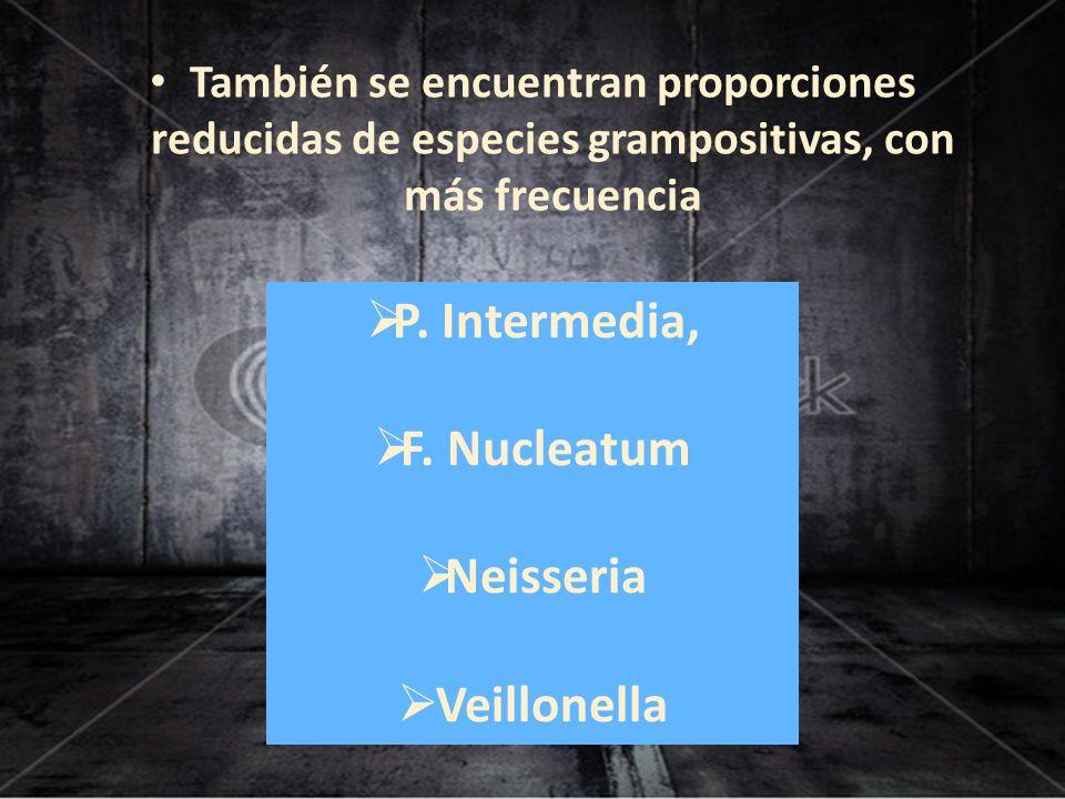 P. Intermedia, F. Nucleatum Neisseria Veillonella